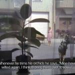 Rebecca Tess Orchids (2008) video